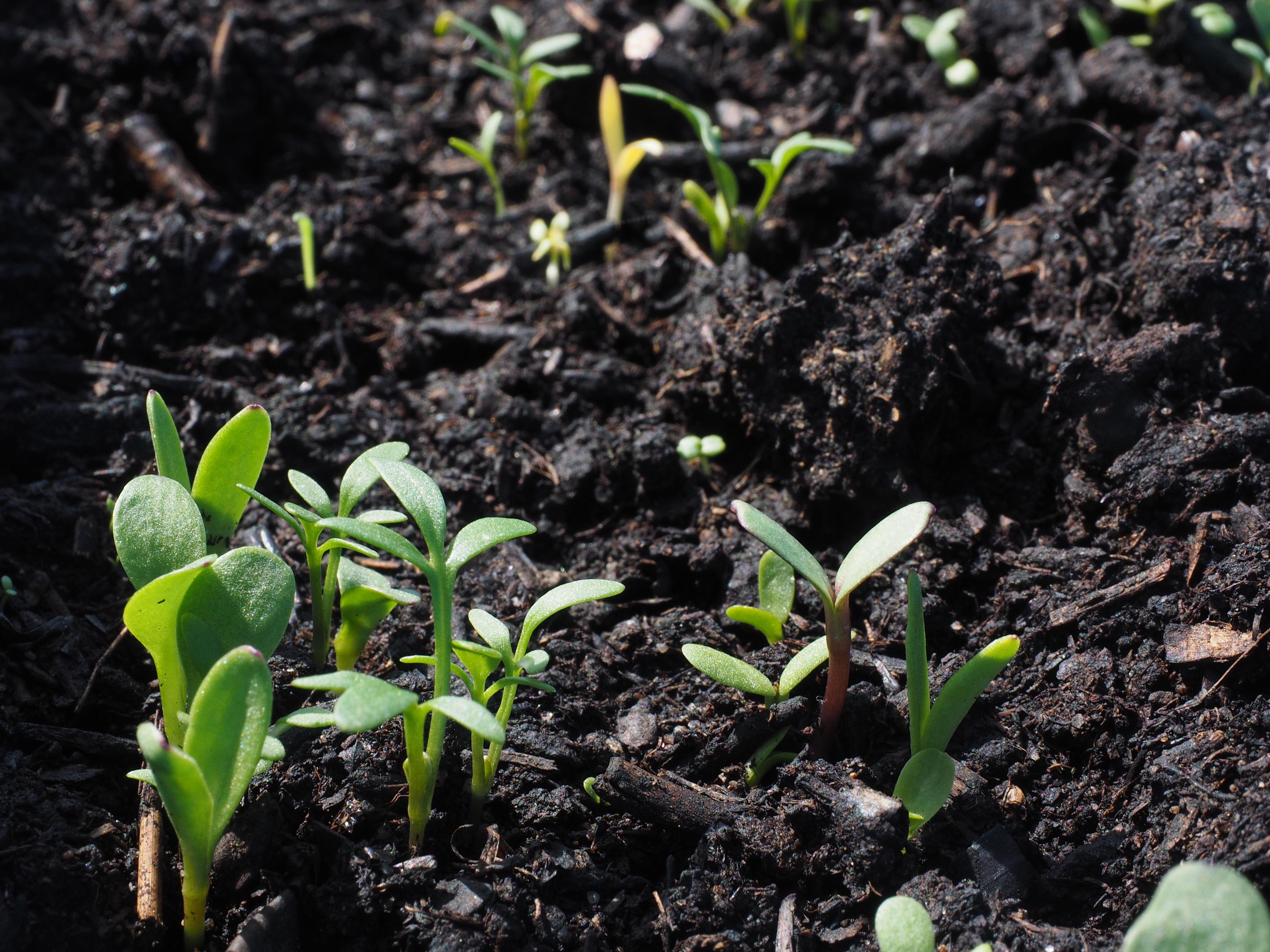 被忽視的土壤生物多樣性 生態監測短板需彌補